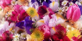 Park Çiçek
